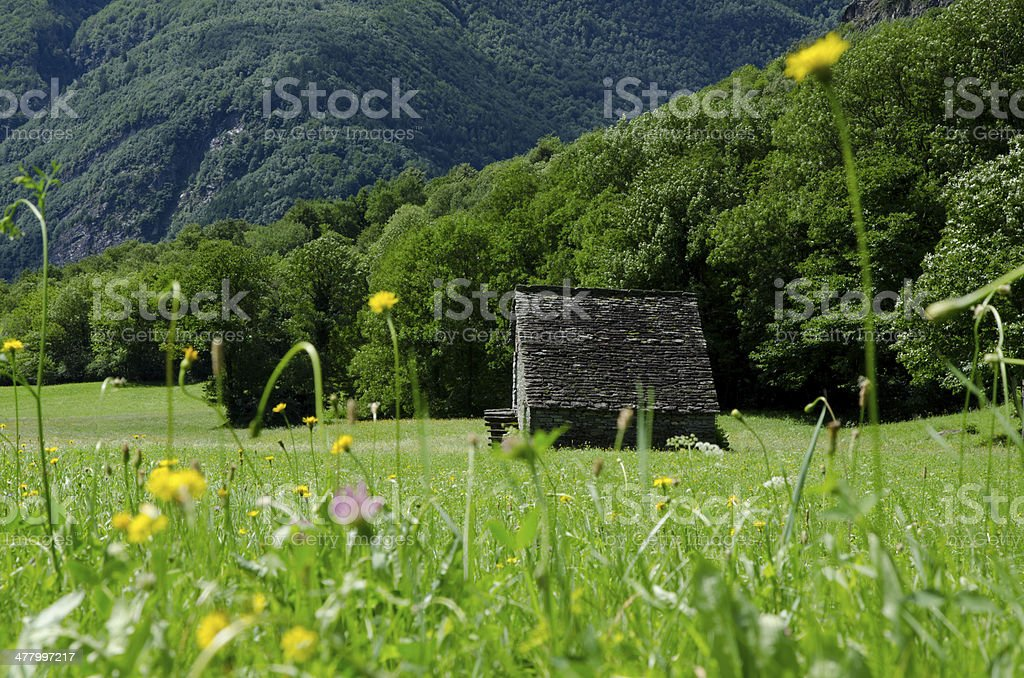 Green field with flowers stock photo
