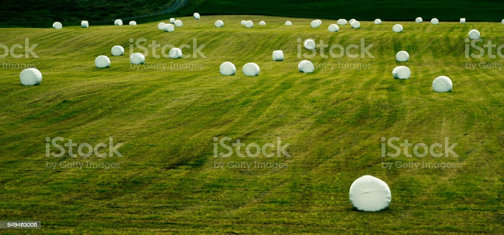 Green field with foliated straw balls stock photo