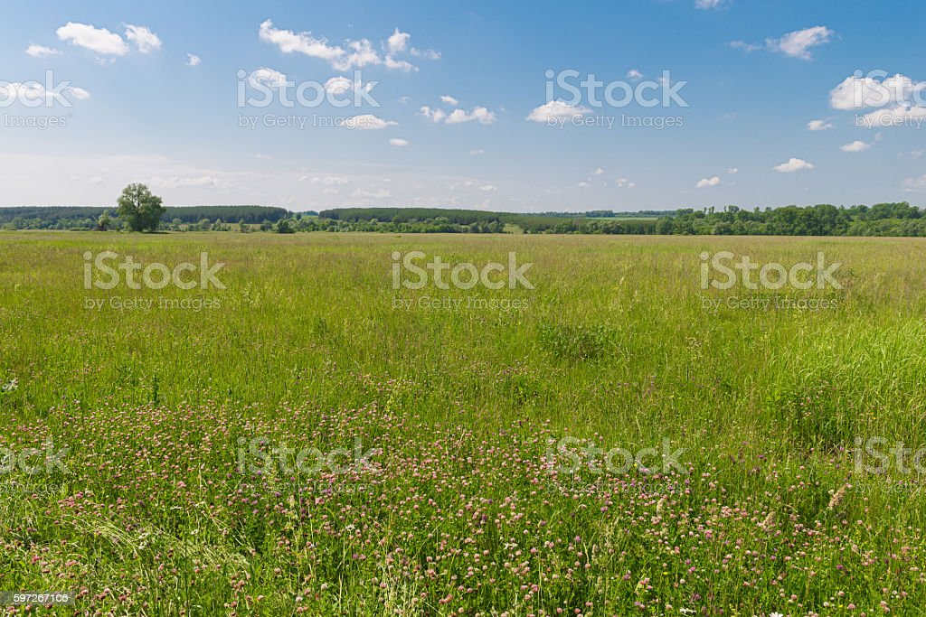 green field with forest on the horizon photo libre de droits