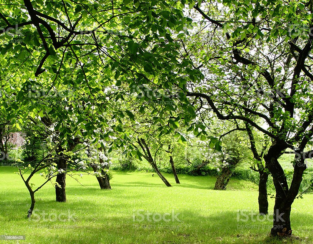 Green field with fruit trees full of flowers royalty-free stock photo