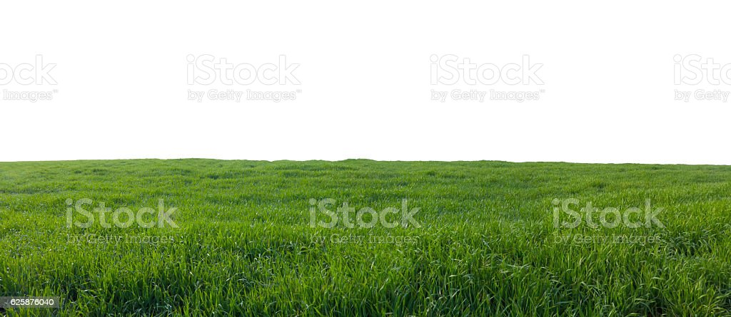 green field with grass isolated on white stock photo