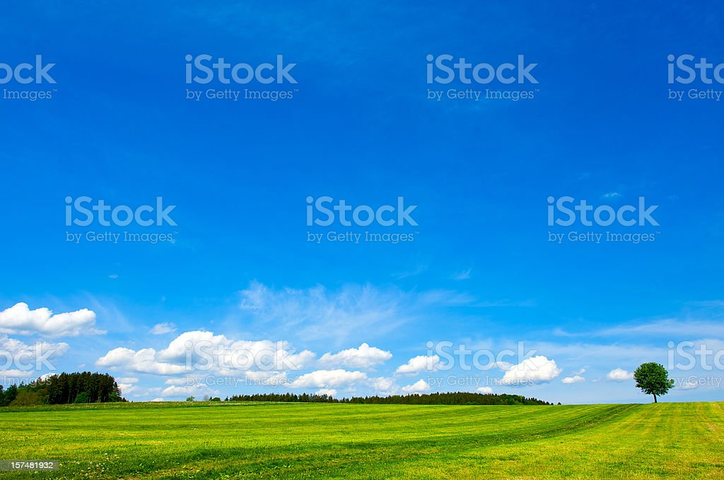 Green field with lonely tree royalty-free stock photo