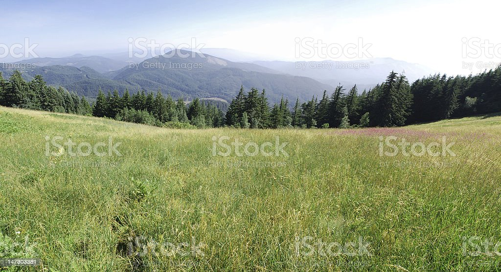 Green field with mountains stock photo