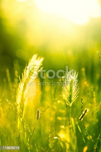 Green field with sunlight.Selective focus.