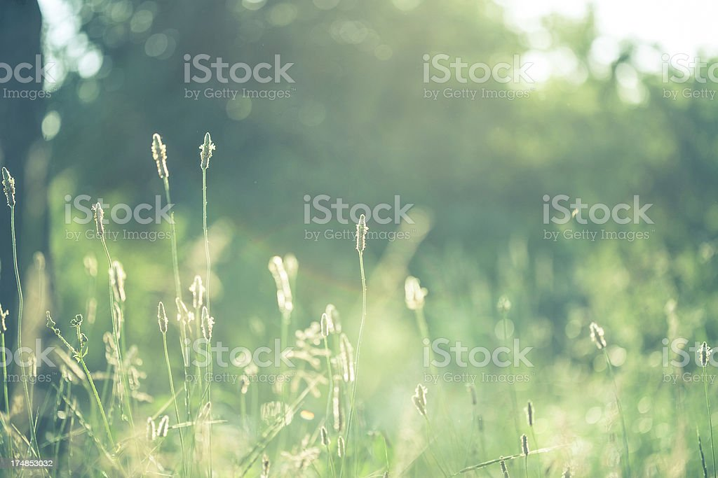 Green field with sunlight royalty-free stock photo