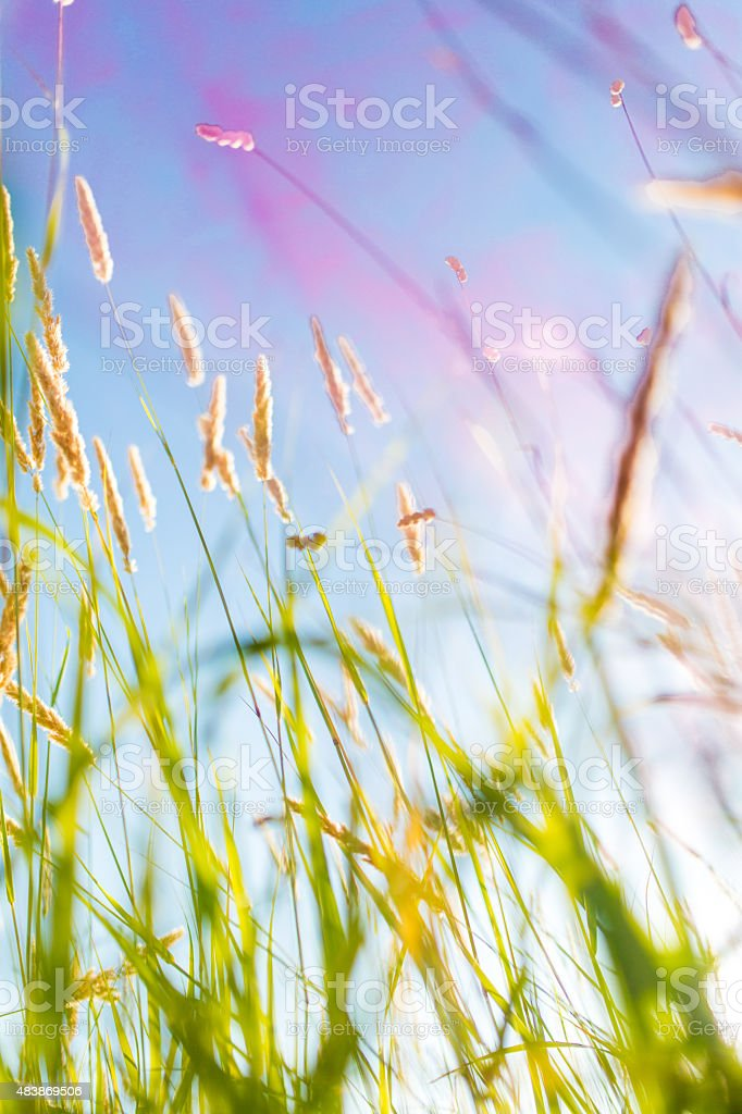 Green field with sunlight stock photo