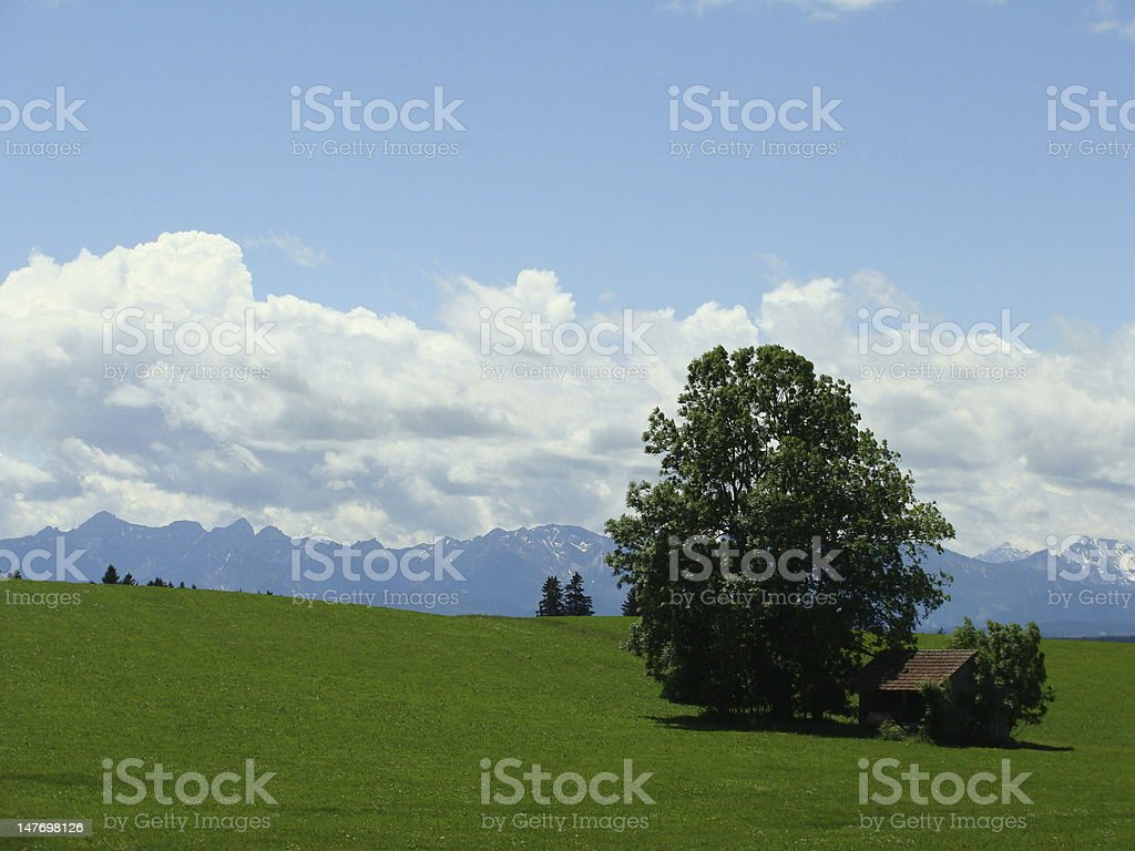 Green field with tree and cot stock photo