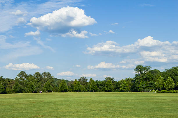 Green field with trees and sky in the background stock photo