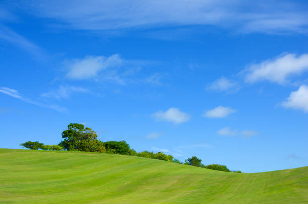 Green fields and blue sky stock photo