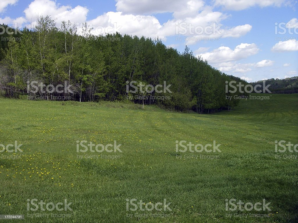 Green, Fields and Forest. royalty-free stock photo