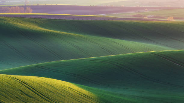 Green fields in the evening in South Moravia Green fields in the evening in South Moravia, Czech Republic. Waves hills with green grass, rolling fields. Beautiful spring landscape at sunset. Agriculture. Colorful nature background. Concept moravia stock pictures, royalty-free photos & images
