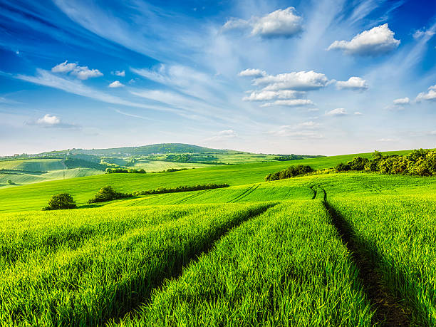 Green fields of Moravia Green fields of Moravia, Czech Republic moravia stock pictures, royalty-free photos & images