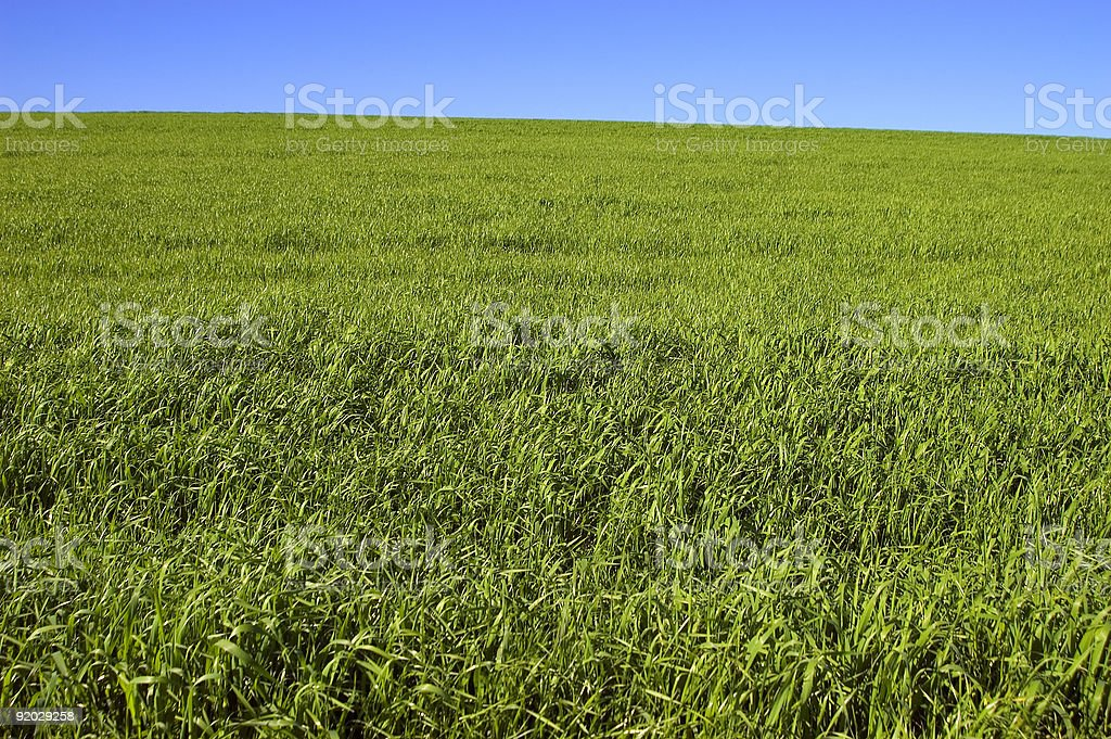 Green fields with blue skies royalty-free stock photo