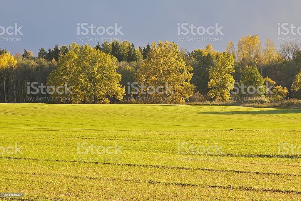 Green filed in Autumn stock photo
