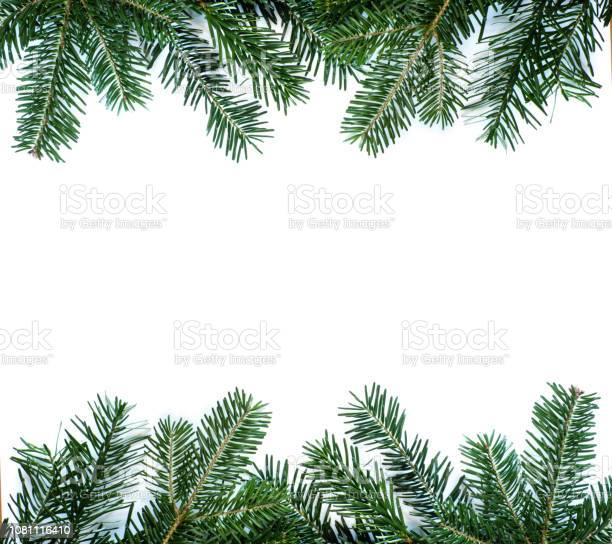 Photo of Green fir branch isolated on white background