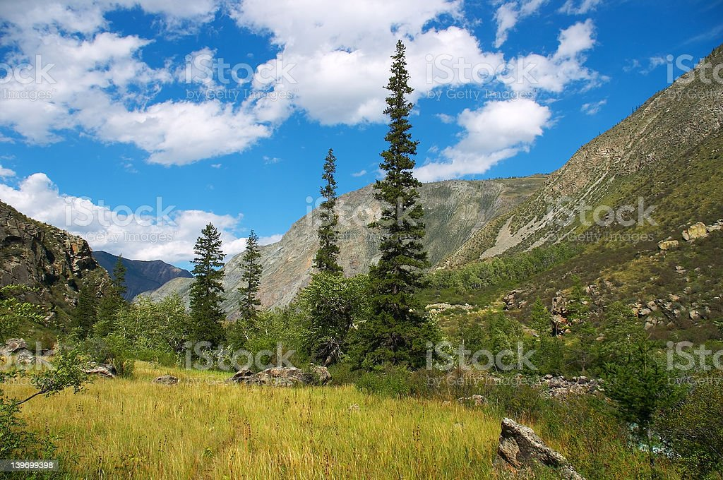 Green firs and blue skies-02 royalty-free stock photo