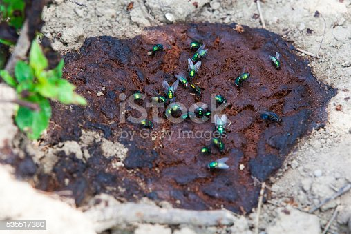 Green flies feasting on human feces in nature stock photo - Grey gardens dive per sempre ...