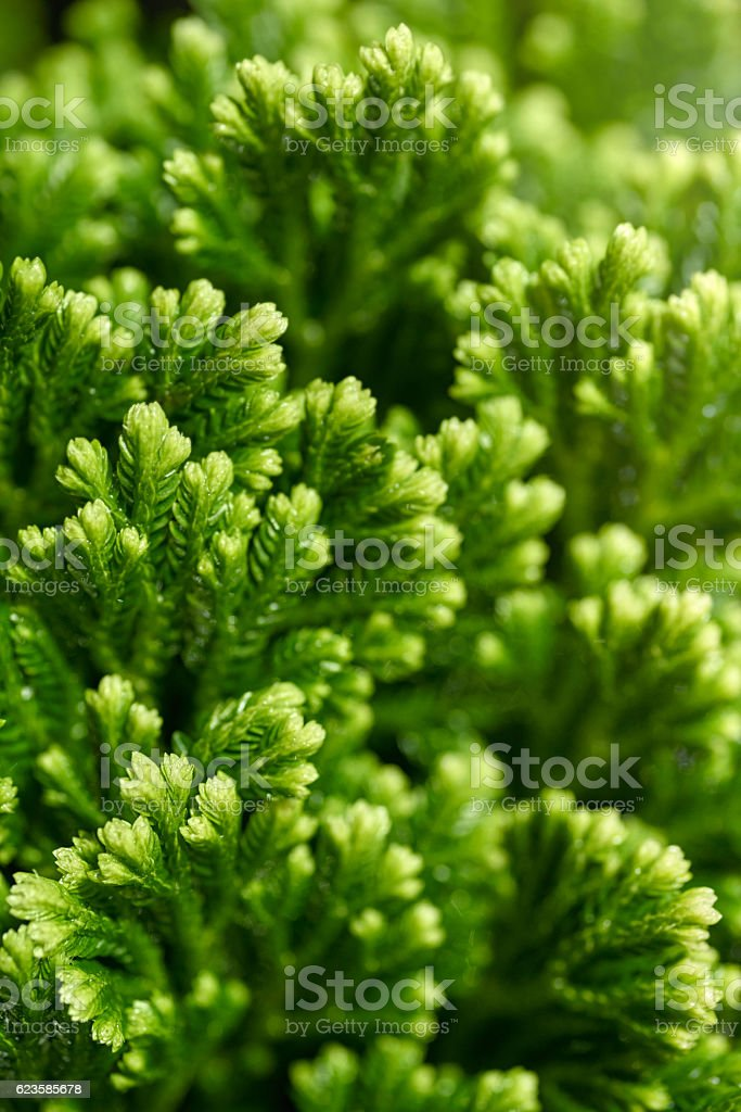 Green floral background royalty-free stock photo