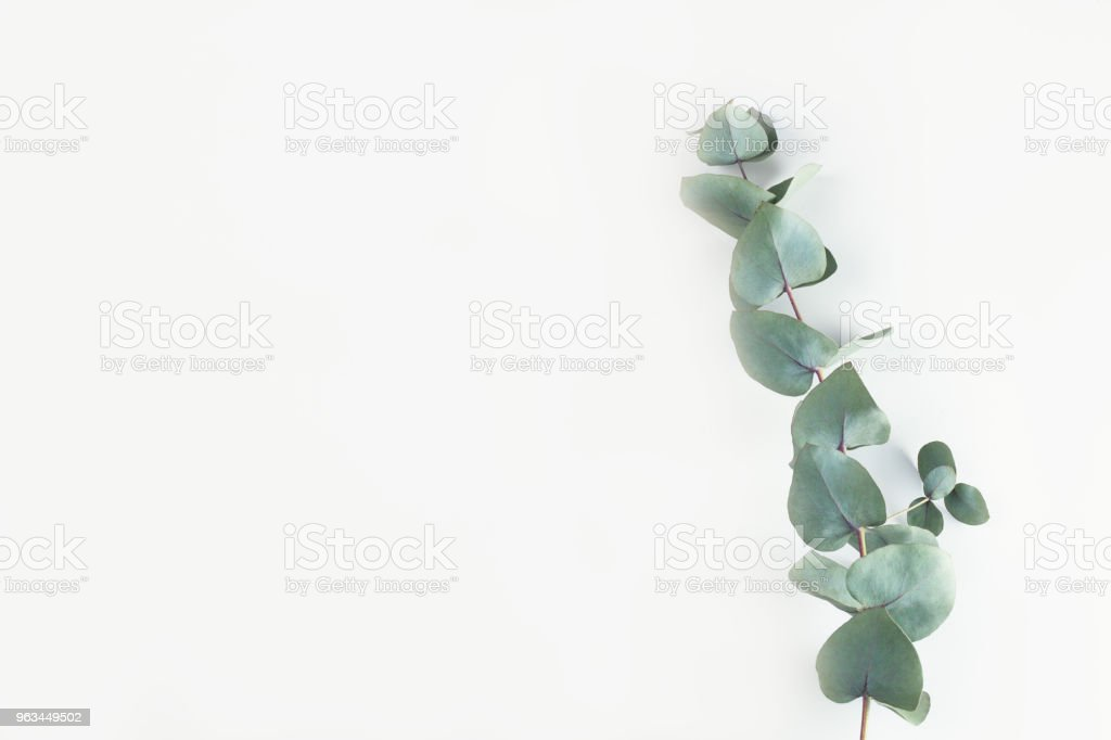 Green floral composition stock photo