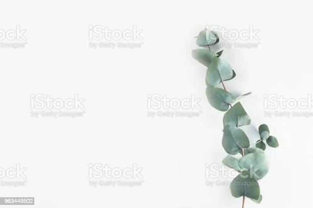 Zielona Kompozycja Kwiatowa - zdjęcia stockowe i więcej obrazów Eukaliptus
