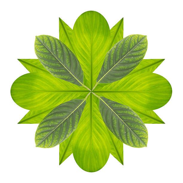 green flower von blatt, isoliert auf weiss - matheblatt etiketten stock-fotos und bilder