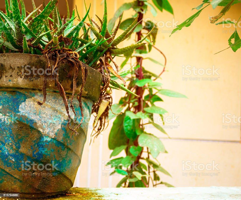 green flower pot - Photo