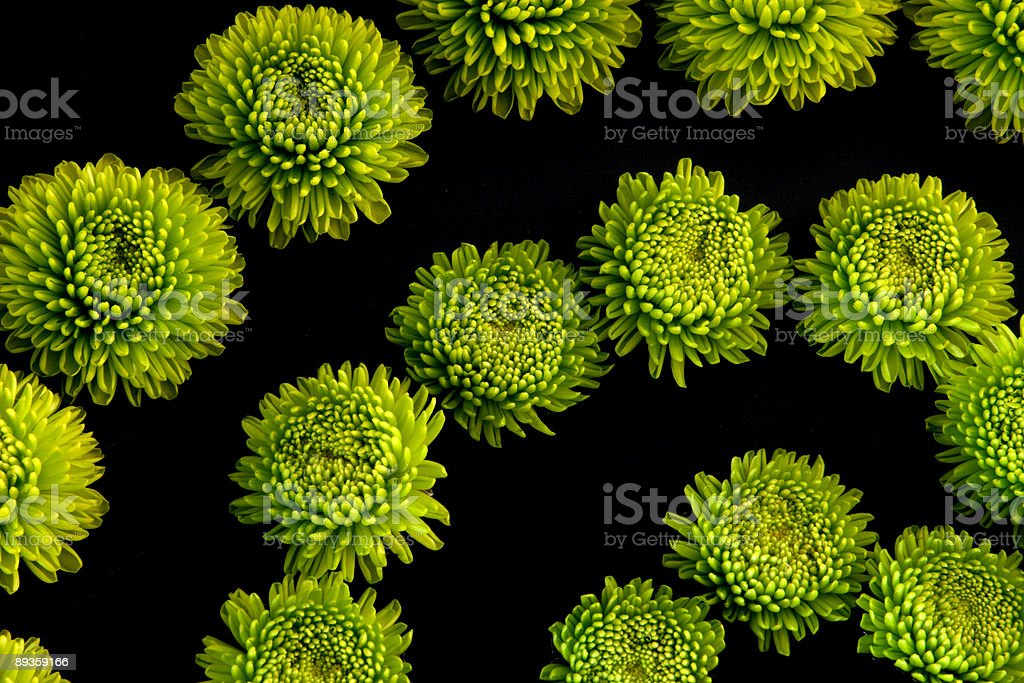 Fiore verde Power foto stock royalty-free