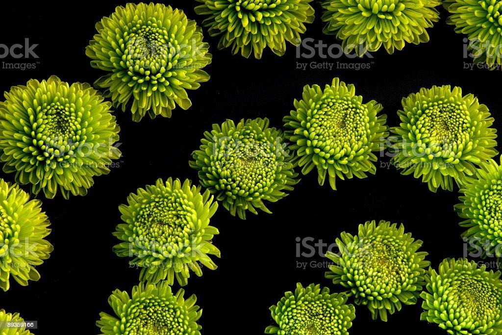 Fleur vert puissance photo libre de droits