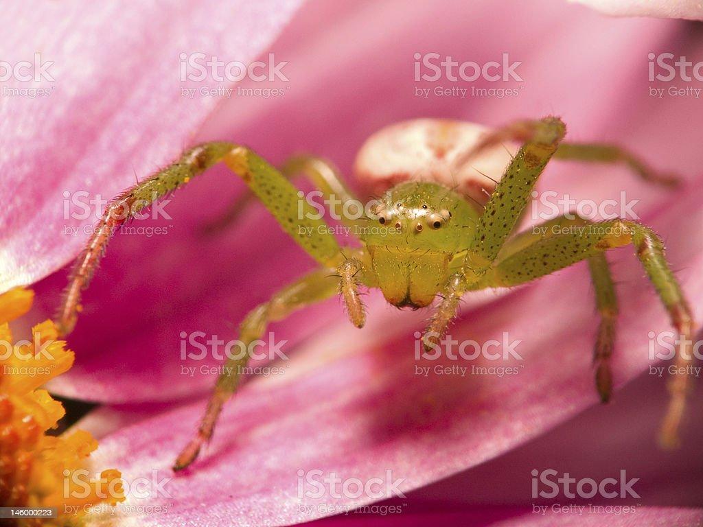 Grüne Blume Spider – Foto