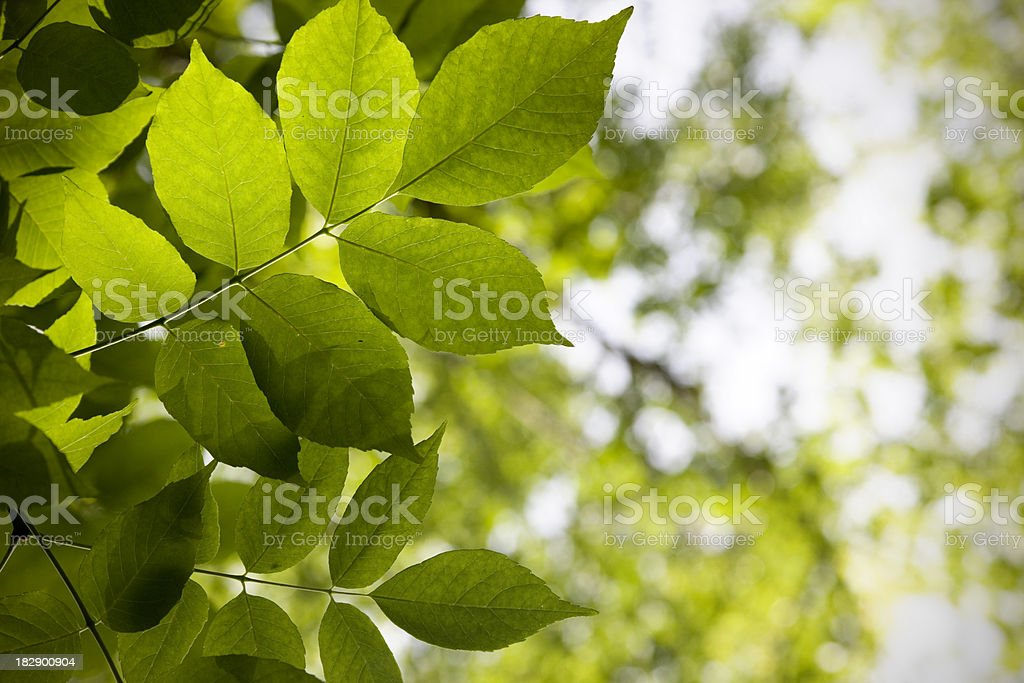 Green foliage background. stock photo
