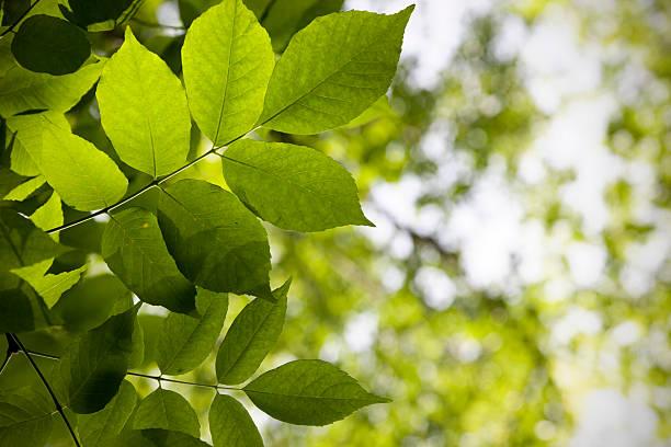 Green foliage background. stock photo