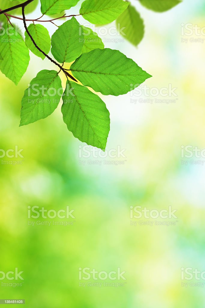 Green Foliage Background XXXL royalty-free stock photo