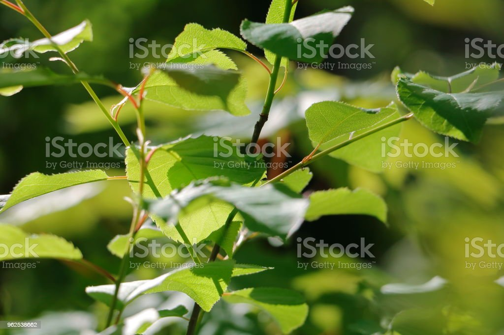 close-up de folha verde - Foto de stock de Beleza royalty-free