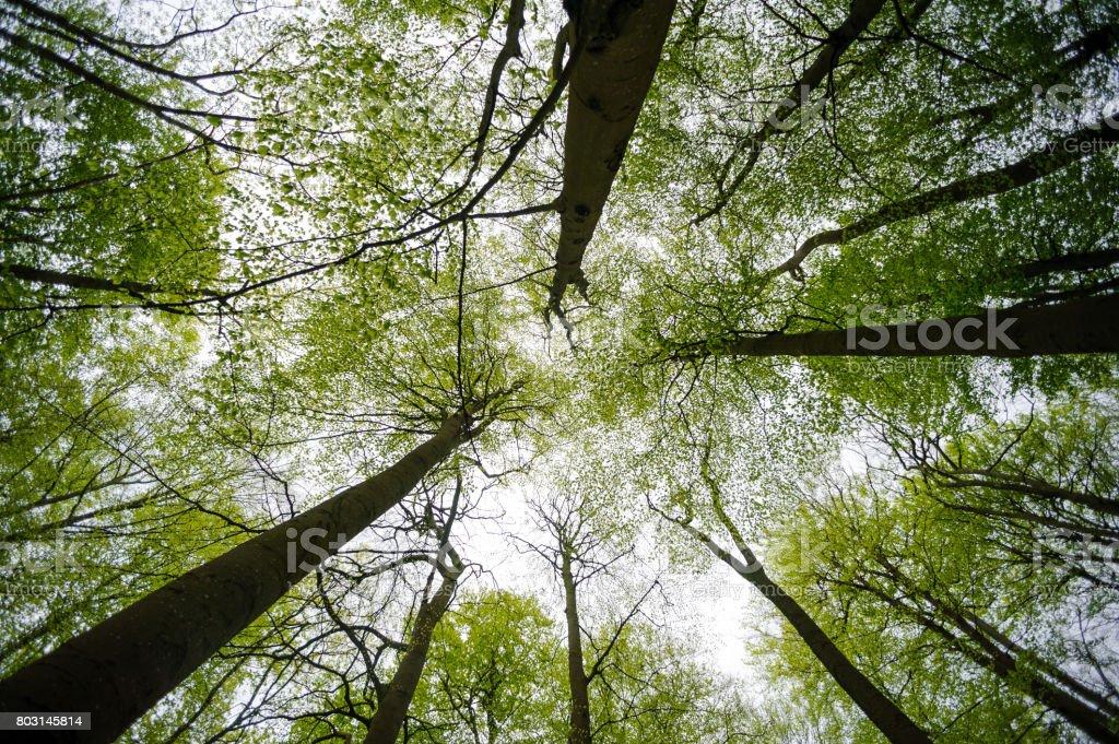 Laub der Bäume hoch in den Himmel – Foto