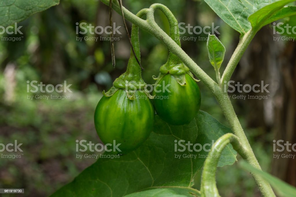 green food stock photo