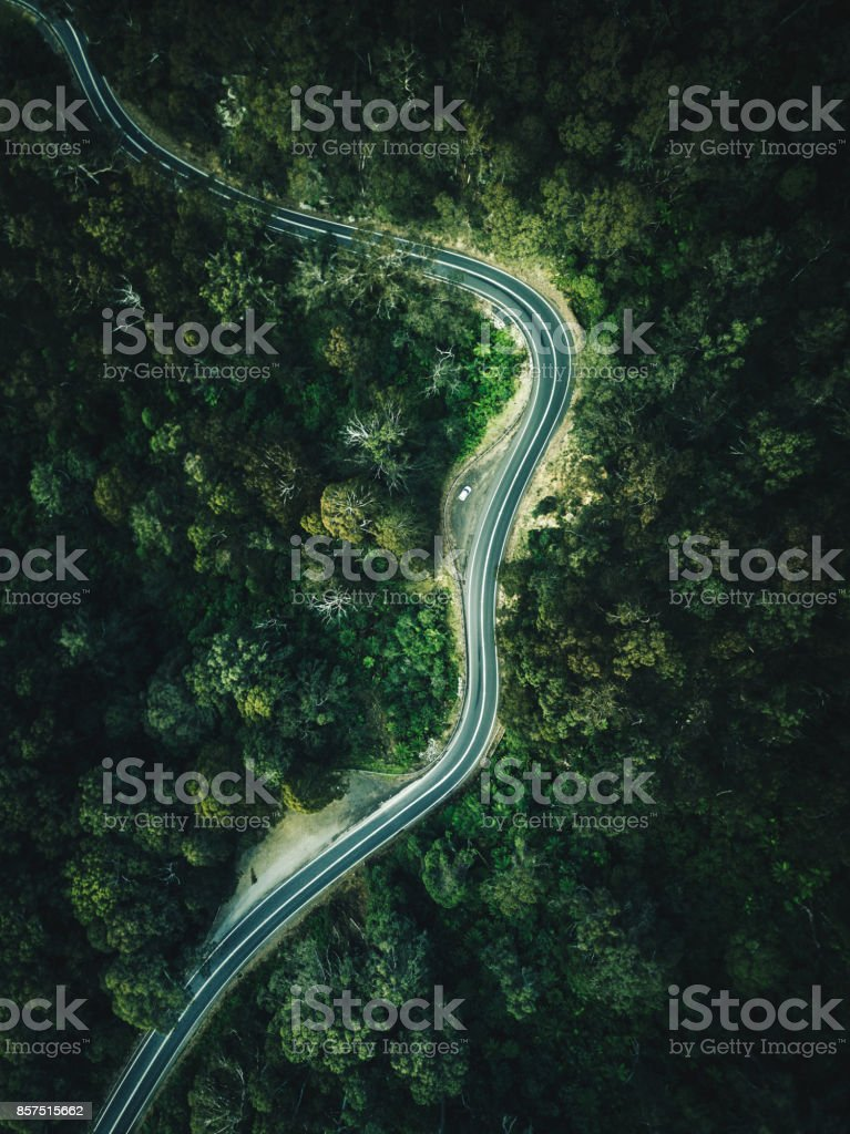 green forest aerial view in australia stock photo