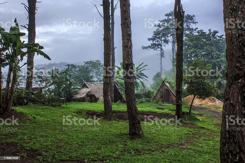 Bosque verde después de una lluvia de verano foto de stock libre de derechos