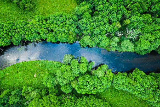 Grüner Wald und Fluss im Naturpark Tuchola, von oben – Foto