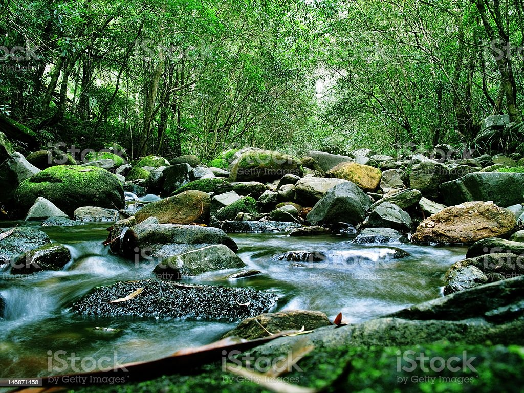 Green Forest and River royalty-free stock photo