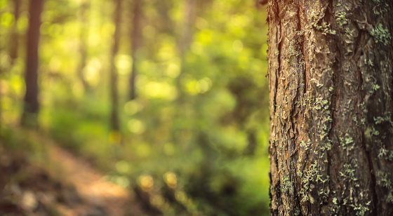 Green forest background. Stock photo.