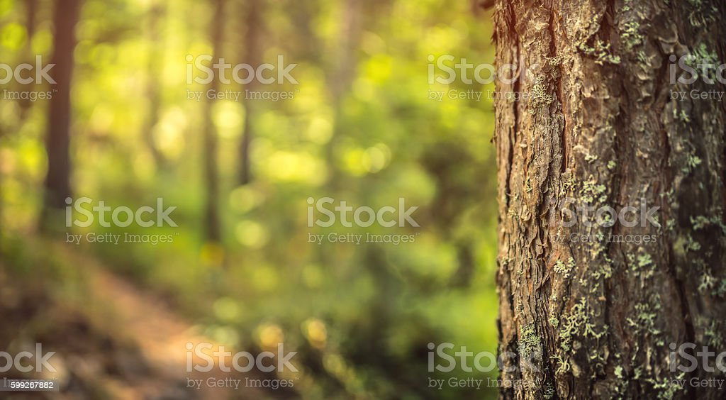 Green Forest Background stock photo