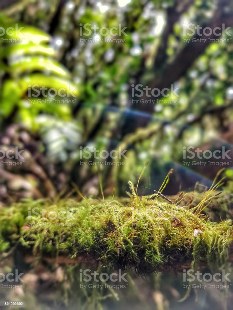 Green forest background royalty-free stock photo