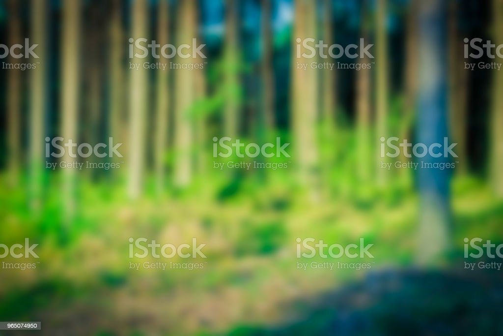 Green forest - blurred image zbiór zdjęć royalty-free