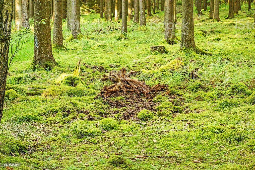 Green forest floor stock photo