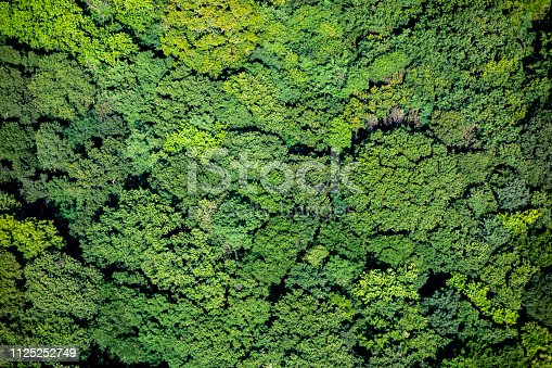 Green forest foliage aerial view