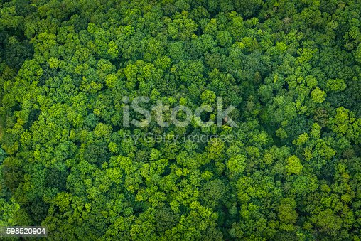 istock Green forest foliage aerial view woodland tree canopy nature background 598520904