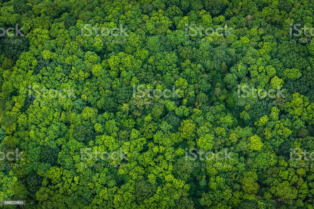 Green forest foliage aerial view woodland tree canopy nature background - foto de stock