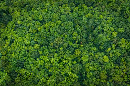 Green Forest Foliage Aerial View Woodland Tree Canopy Nature Background - Fotografie stock e altre immagini di Affari finanza e industria