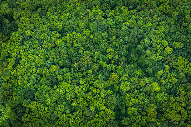 green forest foliage aerial view woodland tree canopy nature background - lush foliage stock pictures, royalty-free photos & images