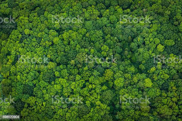 Photo of Green forest foliage aerial view woodland tree canopy nature background